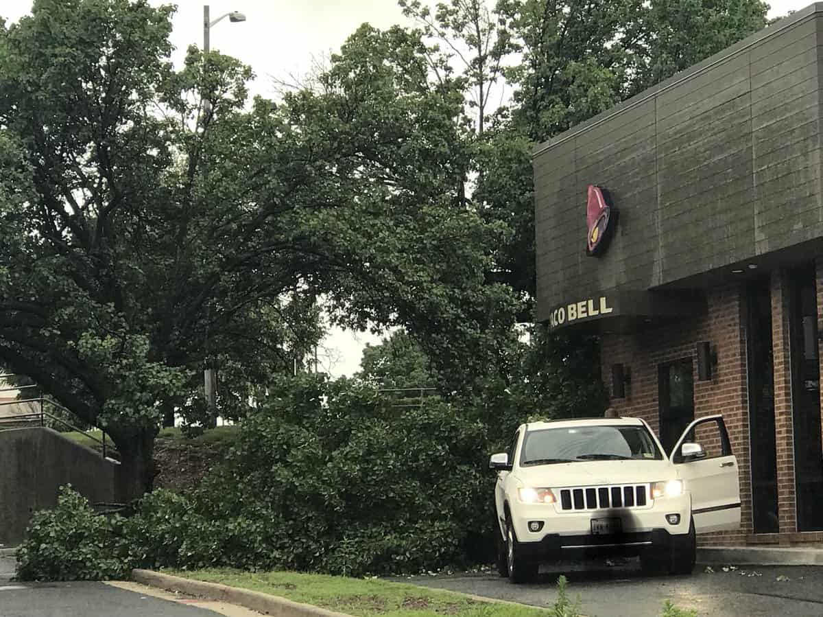 A Twitter follower reported a tree fell on to the drive-thrulane atTaco Bell in Van Dorn Plaza in Alexandria, Virginia late Sunday afternoon.